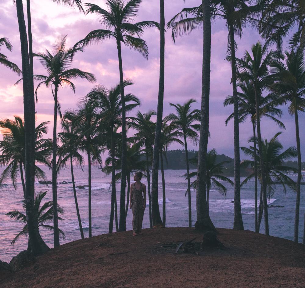 mirissa sri lanka beach palm