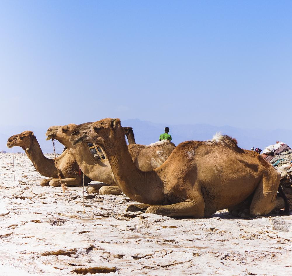 danakil depression zoutvlakte ethiopie
